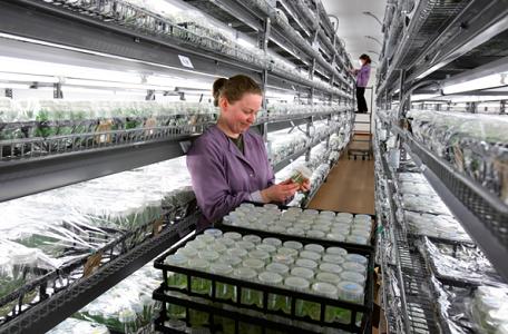 Briggs Nursery Plant Propagators