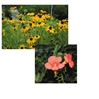 American Native Plants @ MANTS -